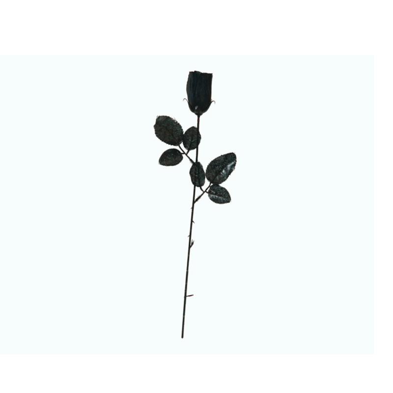 rosa flor negra