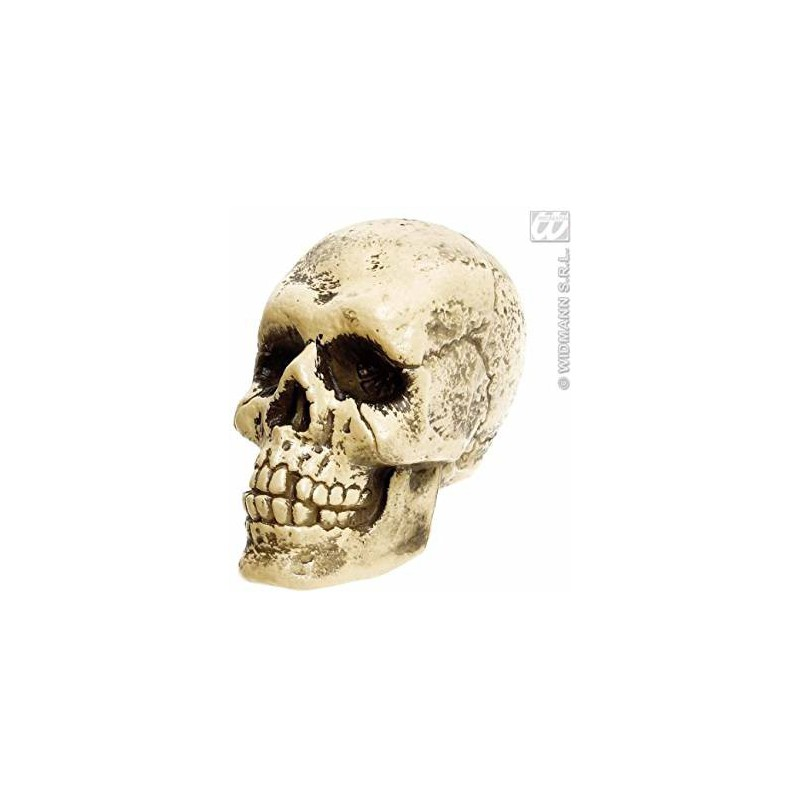 Craneo esqueleto