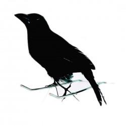 Pajaro Cuervo